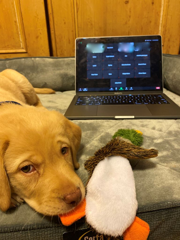 PHOTOVOICE - Dog on Bed by Laptop