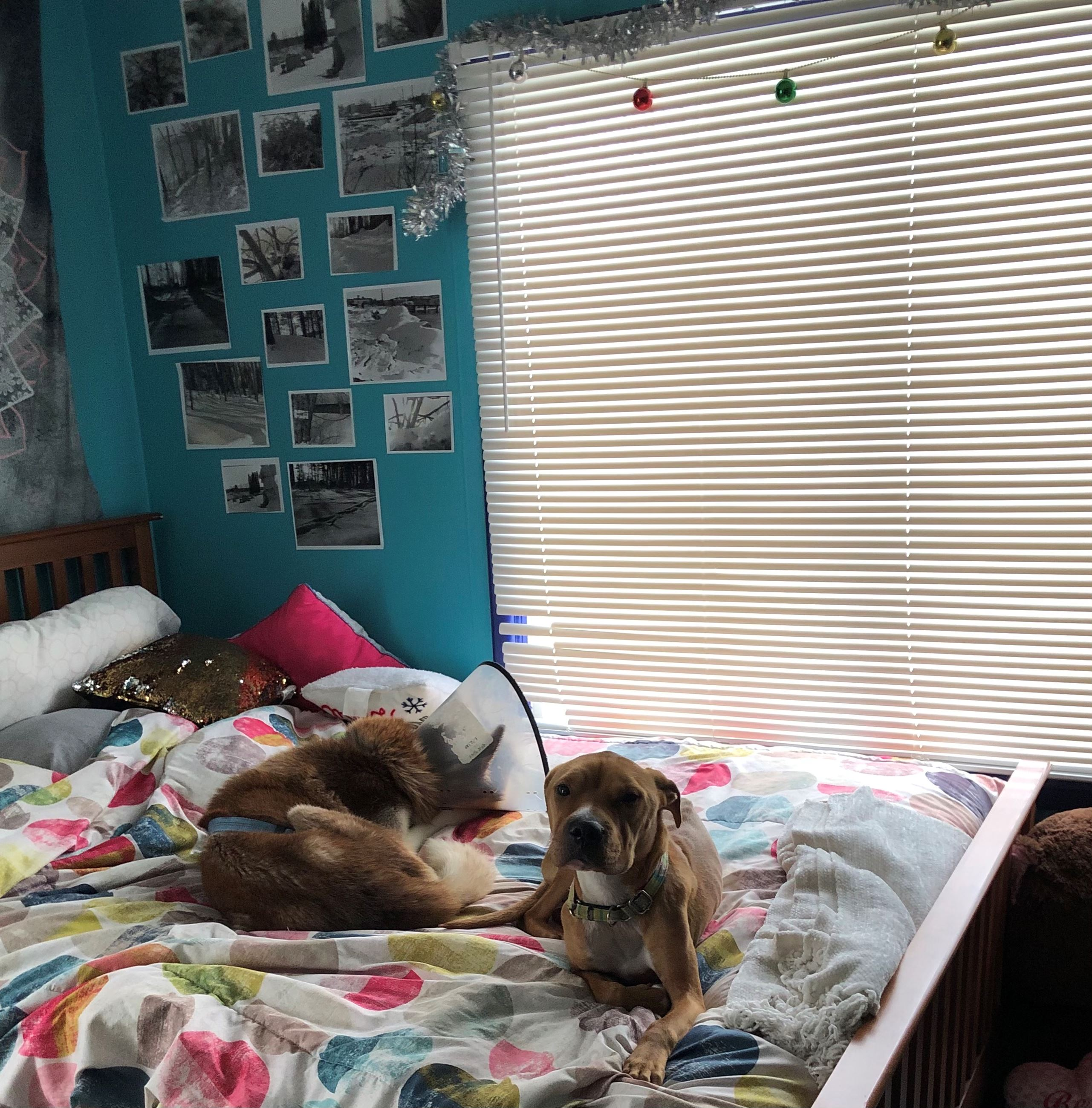 PHOTOVOICE - ARIANA'S DOGS ON HER BED